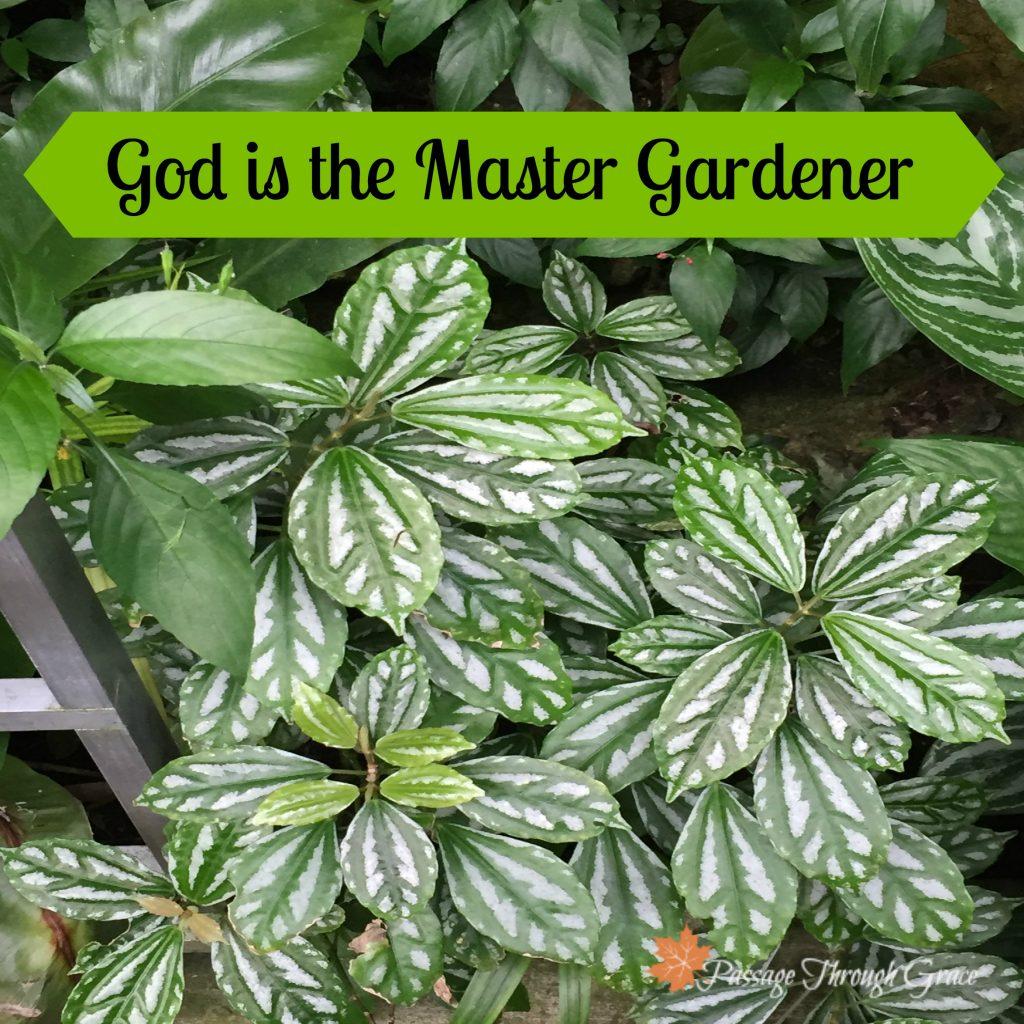 letting go-drawing near-master gardener