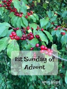 Sabbath Offerings ~ 1st Sunday of Advent