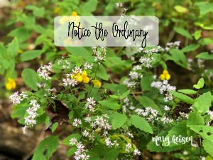 Notice the Ordinary … Book Review