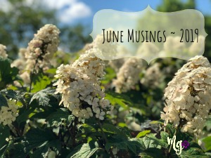 June Musings ~ 2019