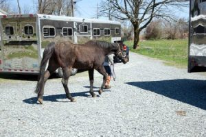 Another horse arrives in New Jersey!