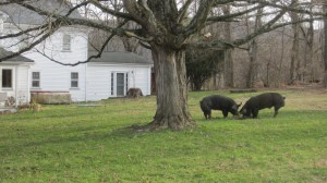 Uh...make yourselves at home, porkers!.