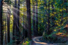 Crepuscular rays through mist and second-growth redwoods, Old Coast Road, Big Sur Coast, California, USA.