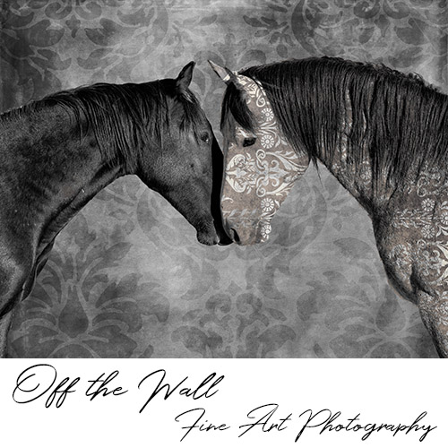 off the wall fine art photography