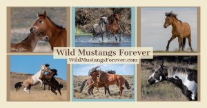 Wild Mustangs Forever