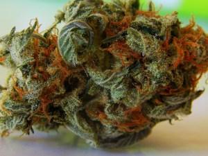 weed, marijuana, cannabis