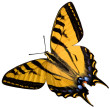 ist1_1164242-eastern-tiger-swallowtail-isolated-objects