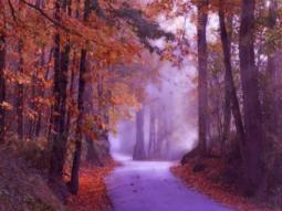Road_AutumnTrees_Mist