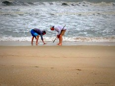 Searching for shark's teeth.