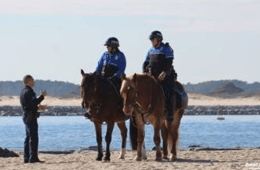 Police Horse