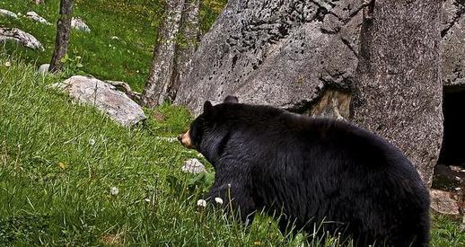 bear getting organized