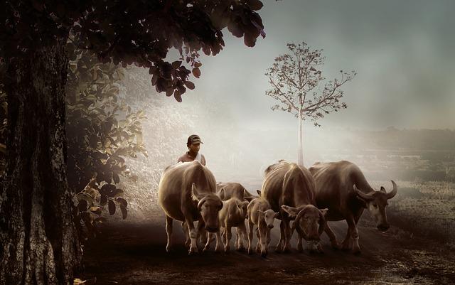 man, village, shepherd, cows on the road