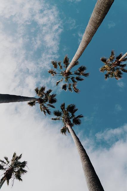 palm tree, tropical, sky