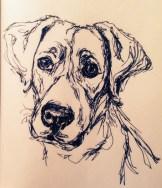 Ruby, ink doodle