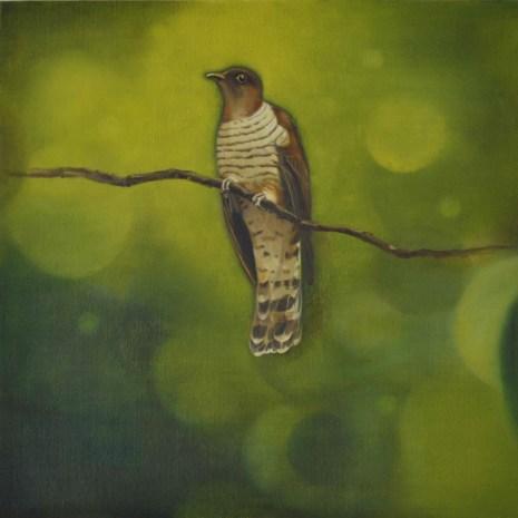 Russet Winged Cuckoo 03