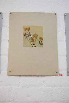 Ranunculus Veronica Ballymascanlan