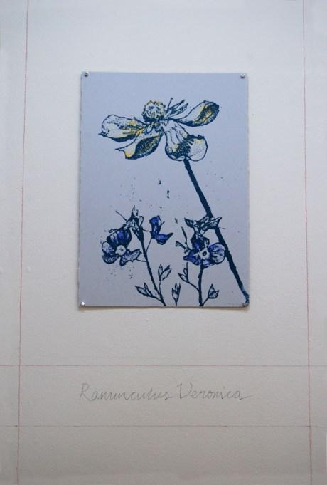 Ranunculus Veronica