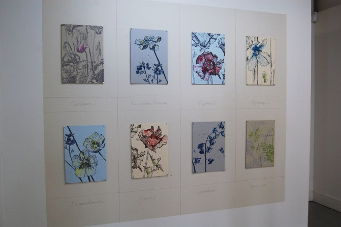 The images were printed on coloured papers to emulate the paper used by the Plunket sisters in their book 'Wild Flowers from Nature'