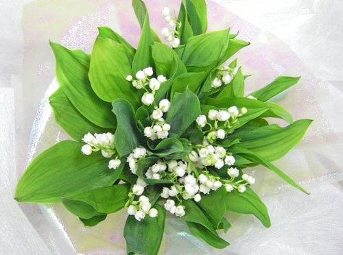 スズランの花束~Muguet