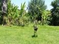 Palmen, Bambus, Bananen und Kunst