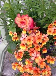 Front Porch Begonia Pot