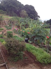 Local allotments along the way