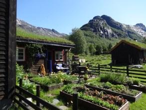KJøkkenhagen på Renndølssetra