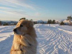 Skitur Løålikjølen