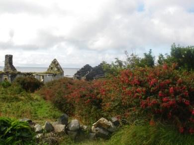 Ruiner og blomster Irland