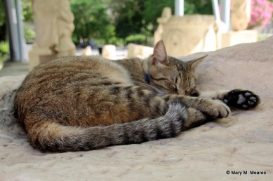 People can't touch the ancient sculptures, but cats can sleep on them!