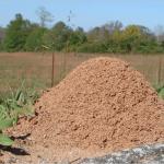 ヒアリの大きさや巣の見た目は?家に出たときの駆除方法や対策まとめ