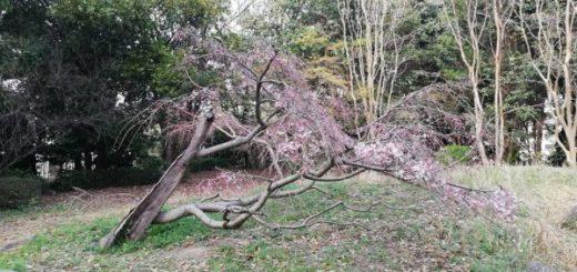 倒れかかったデザイン性のある木