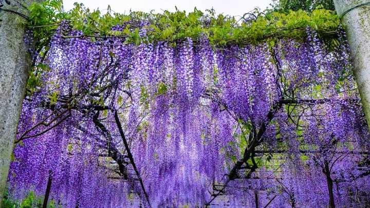 Эти фотографии Fujiyama Shrine настолько красивы, что почти жутковаты