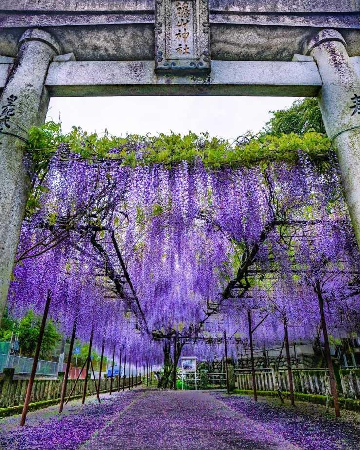 фотографии Fujiyama Shrine 8
