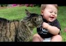 Watch Funny Babies & Cat Compilation Videos Where Babies Annoying Cats