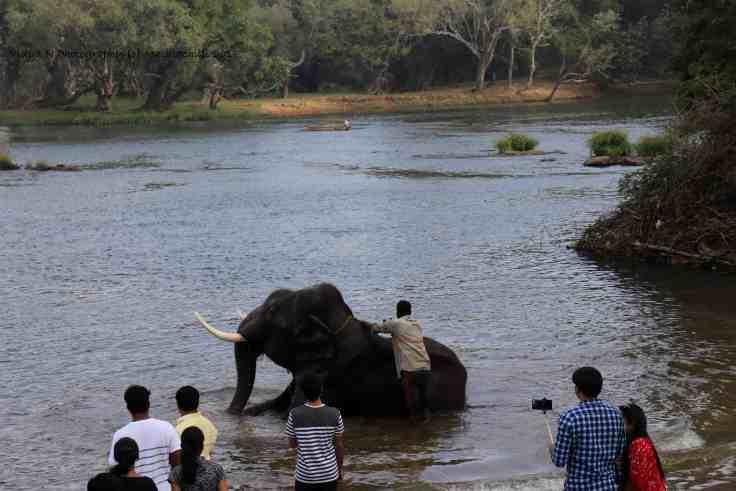 Dubare Elephant Camp 2