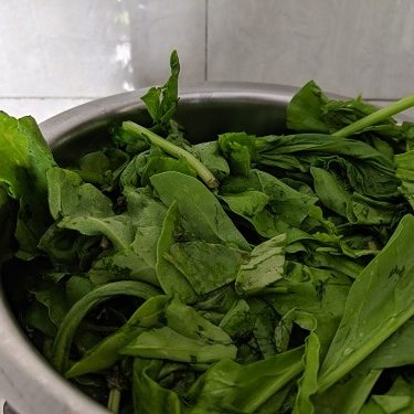 Adding spinach to water