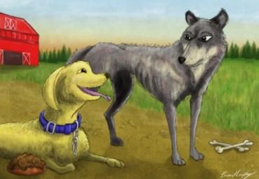 Kut ile Köpek