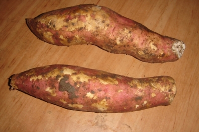 red-sweet-potato