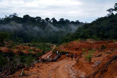 Illegal logging by Dharma Satya Nusantara (DSN) Palm OIl Company in virgin forest June 2013)