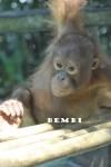 Bembi FS 6 (4)