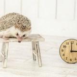 「時間がない」をやめる。日々の生活を効率化して時間を作る方法
