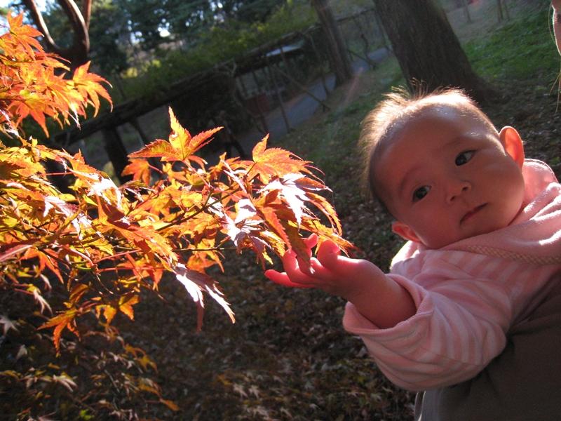 紅葉に手をやる赤ちゃん
