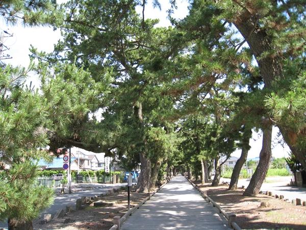 三保の松原の神の道
