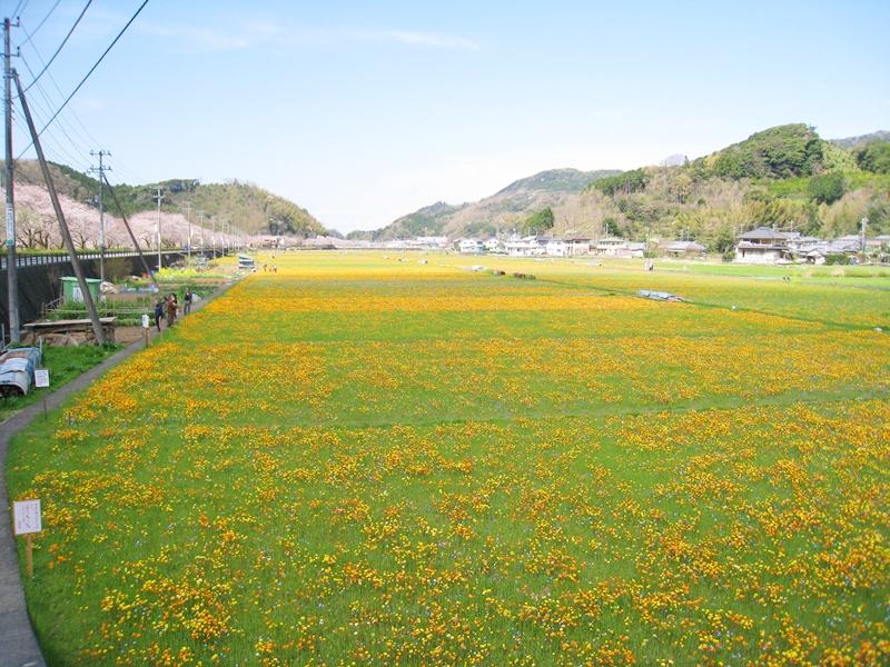 松崎町の花畑