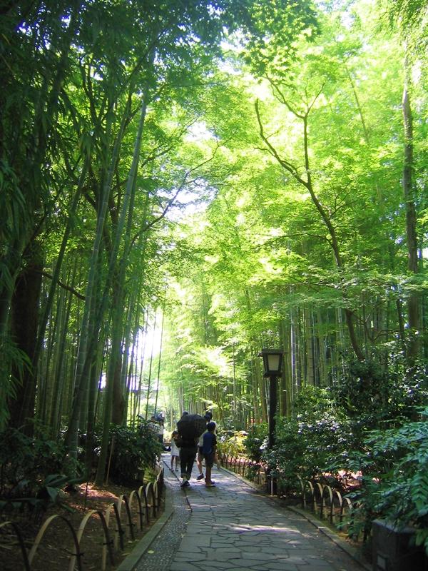 竹林が広がる、その間を歩く人々