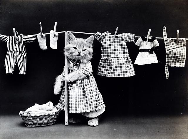 家事をする猫