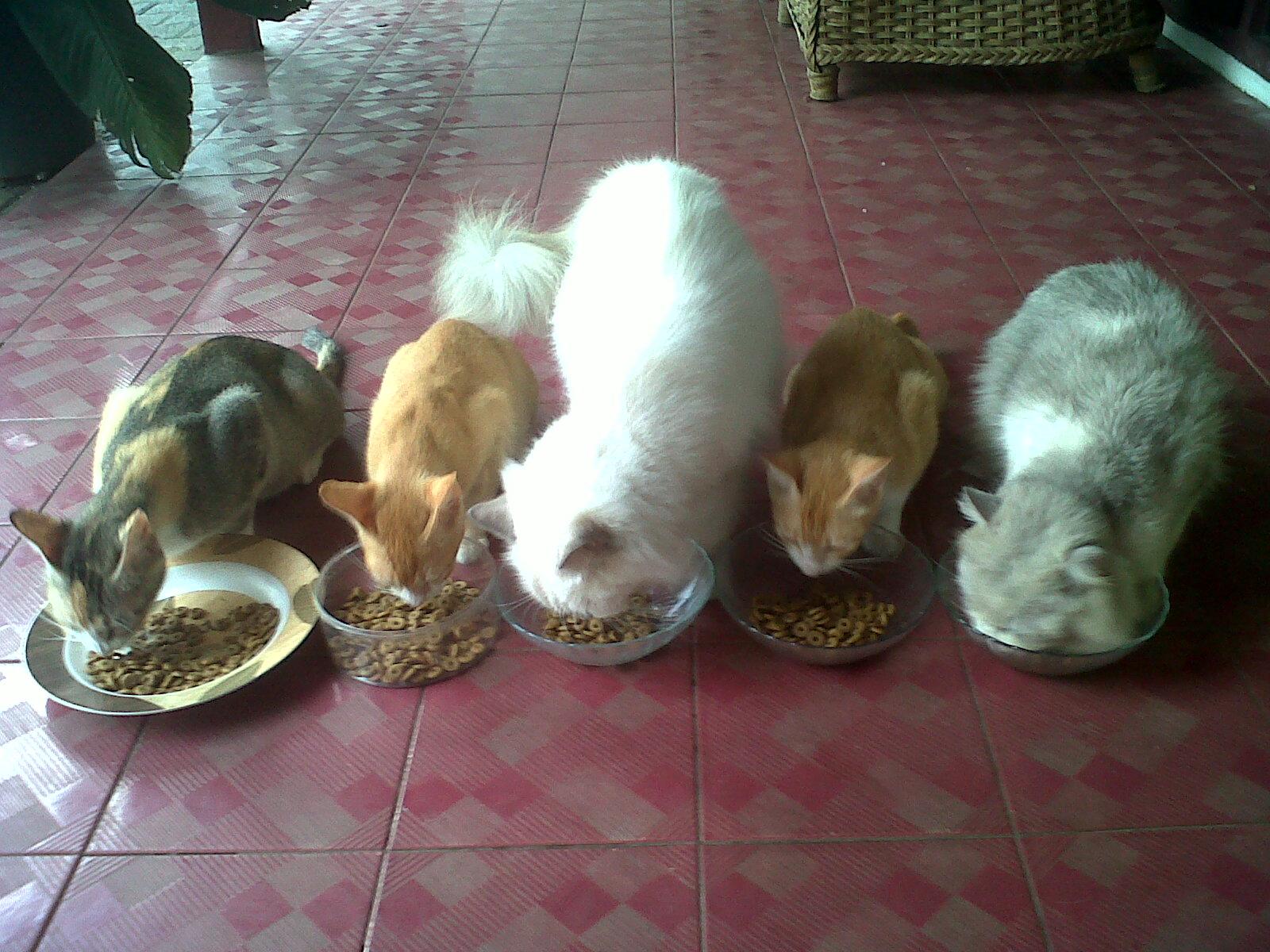 hewan omnivora kucing makan