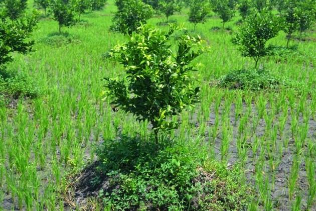 kimwijayakusuma-lmj.blogspot.com