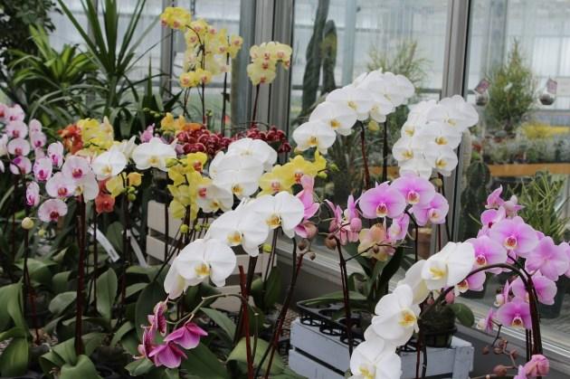 aneka jenis tanaman indoor beserta gambarnya